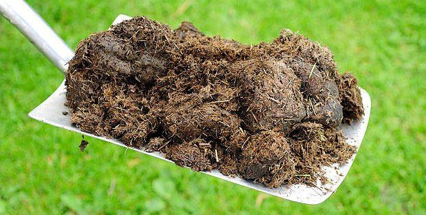 Como fazer adubo orgânico com esterco