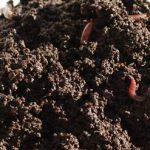O Húmus de Minhoca irá Turbinar o Seu Adubo Orgânico