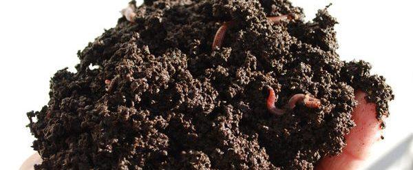 Humus de minhoca - Como fazer adubo orgânico