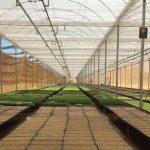 O Cultivo Protegido é Fundamental para Produzir em Qualquer Situação Climática, Durante o Ano Inteiro