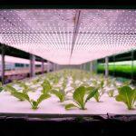 iluminacao artificil para plantas imgrower