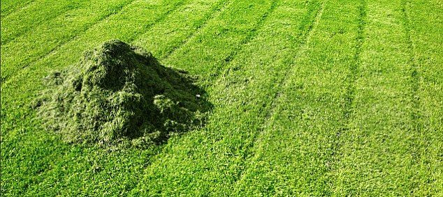 grama cortada adubo organico da imgrower