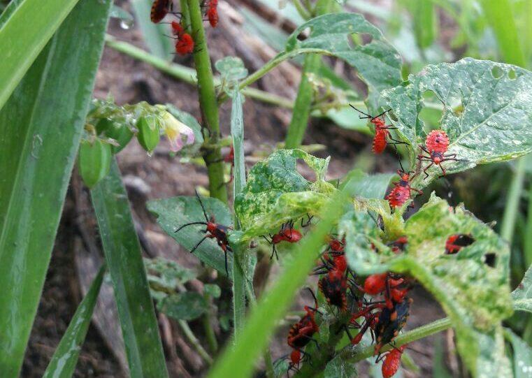 controle de pragas e doencas-imgrower