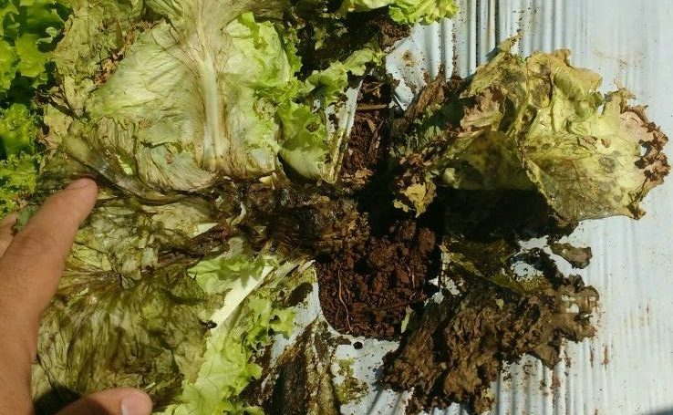 doencas-imgrower