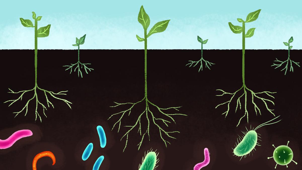 microrganismos-solo
