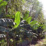 Agricultura Sintrópica de Ernst Götsch Pode Reviver Nosso Ecossistema