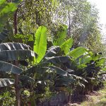 agricultura sintropica imgrower