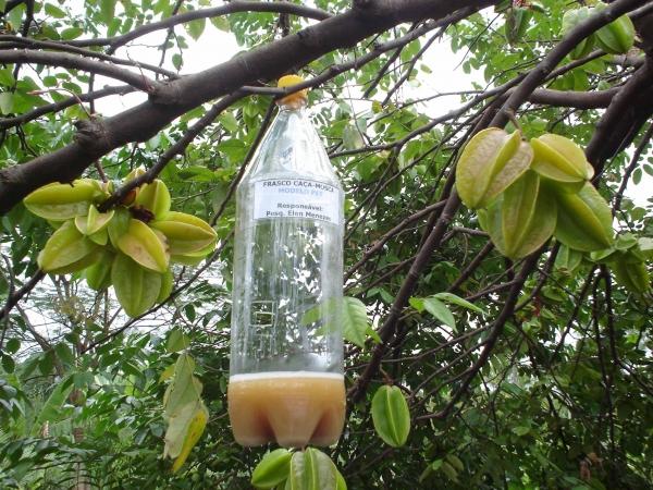 como fazer armadilha para mosca da fruta 2