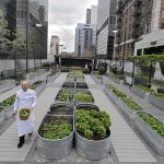 A Agricultura Urbana irá Salvar o já Defasado Sistema de Produção de Alimentos