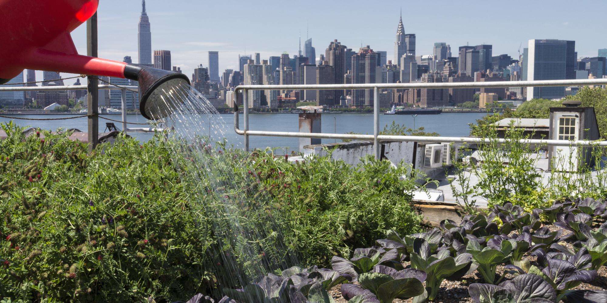 agricultura urbana horta urbana