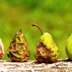 doenças nas plantas