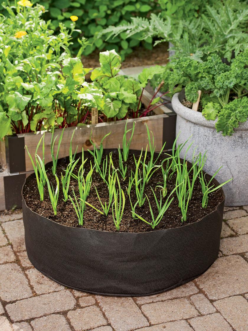 como-plantar-alho-organico-imgrower