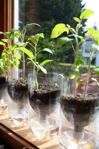vaso auto irrigável: horta vertical