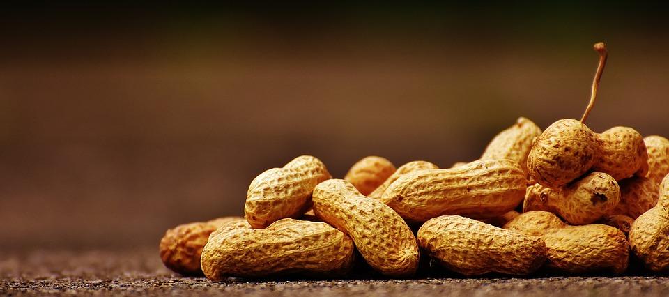 como plantar amendoim orgânico : como plantar grama amendoim orgânico