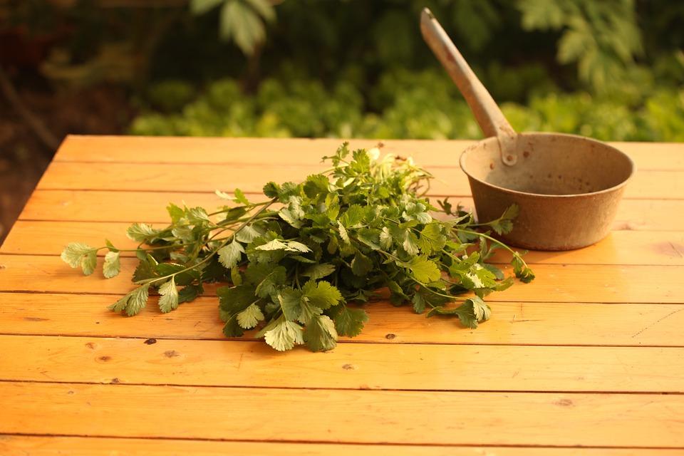 como plantar coentro orgânico : adubos orgânicos para hortas