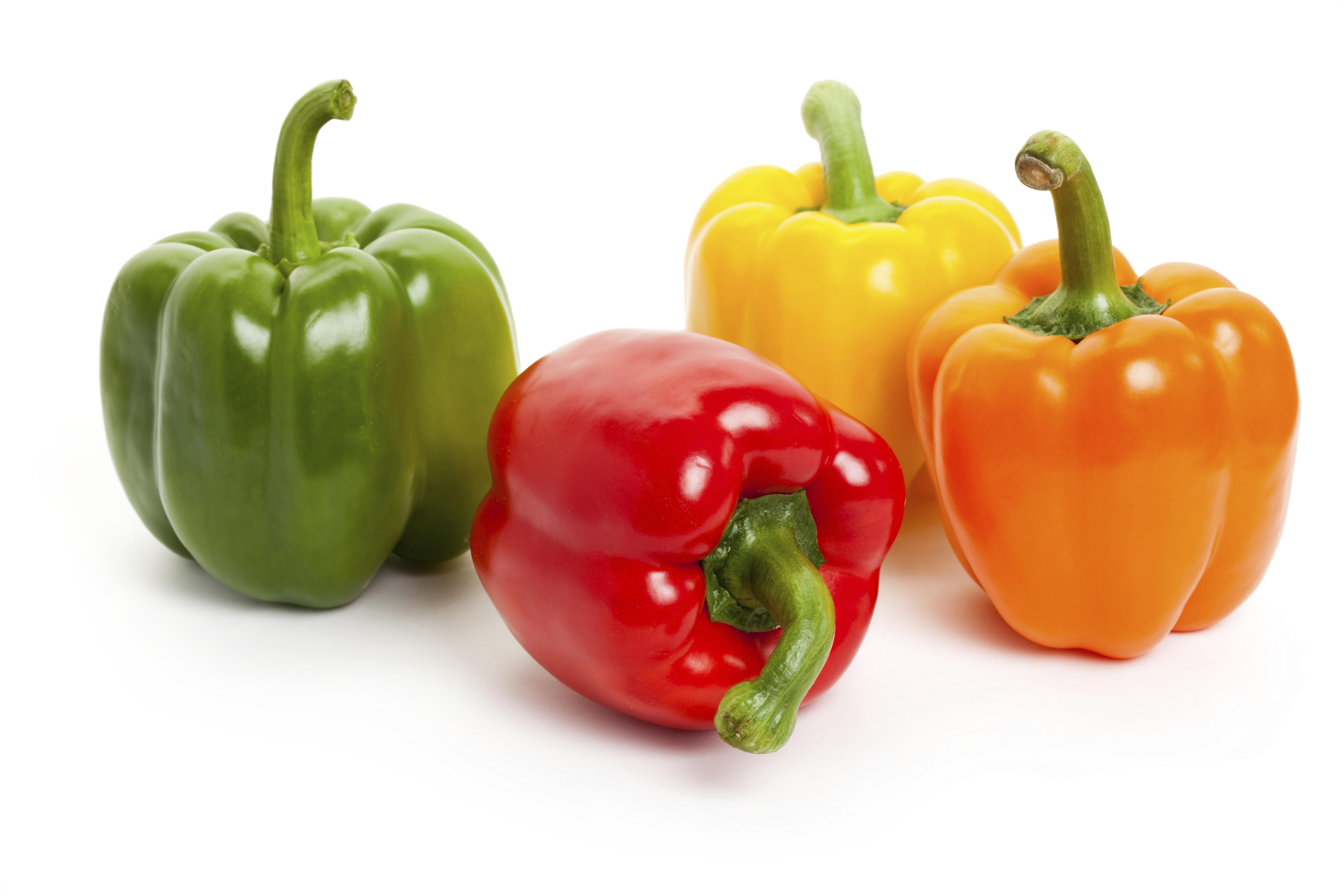como plantar pimentão orgânico