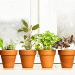 Aprenda Como Fazer Uma Horta Orgânica em Casa em 6 Simples Passos