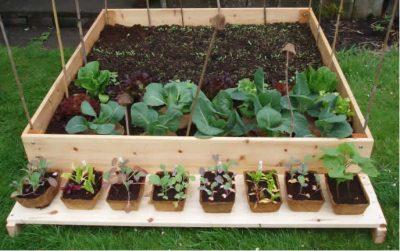 como fazer uma horta orgânica :adubo para horta