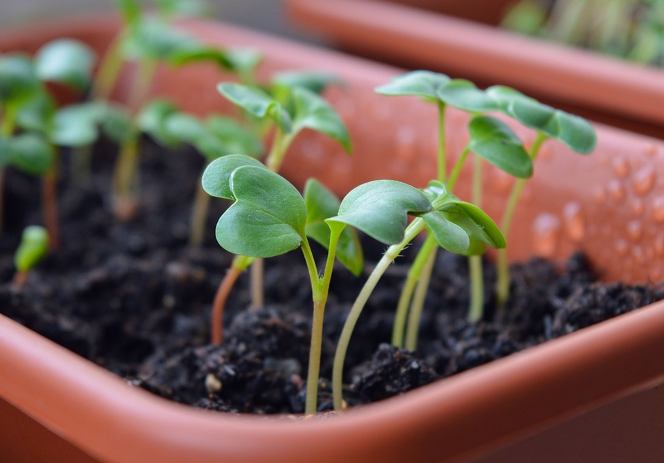 como fazer uma horta orgânica : como cultivar hortaliças