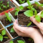 Saiba quais os benefícios de ter sua própria Horta Medicinal