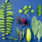 Porquê Você já Deveria ter PANCs na sua Horta Orgânica