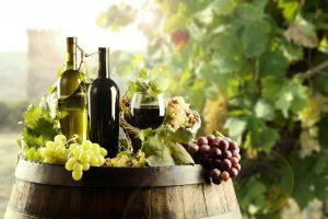 vinhos orgânicos : clube do vinho
