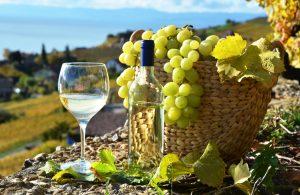 vinhos orgânicos : vinho organico comprar