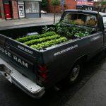 Conheça a Horta Móvel - Nova Tendência Para o Cultivo em Pequenos Espaços