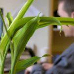 O Que Você Já Deveria Saber Sobre Plantas Purificadoras de Ar