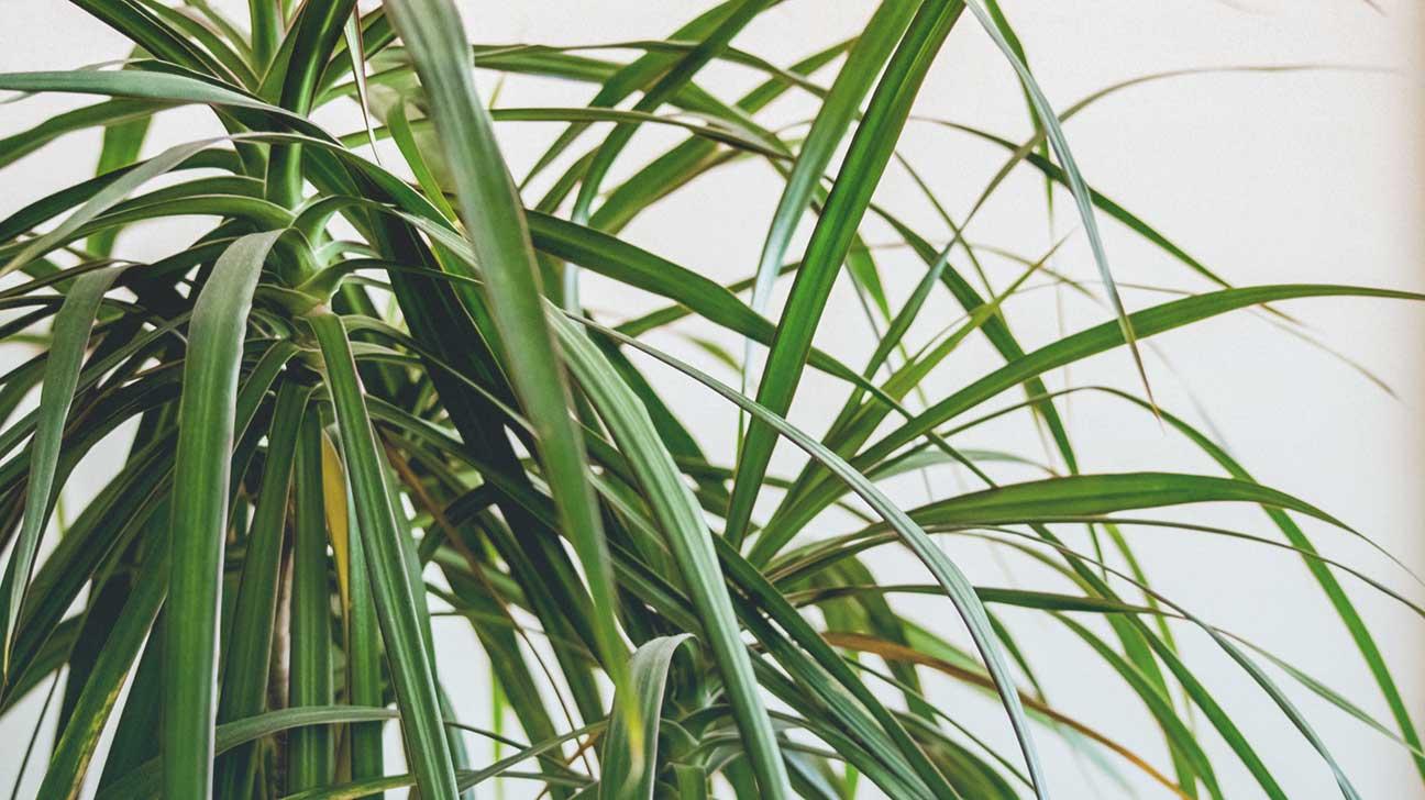 plantas purificadoras de ar : como purificar o ar do quarto