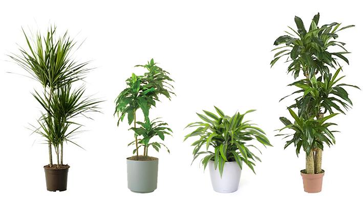 plantas purificadoras de ar : plantas para ambientes fechados