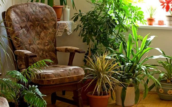 plantas purificadoras de ar : plantas para ambientes internos