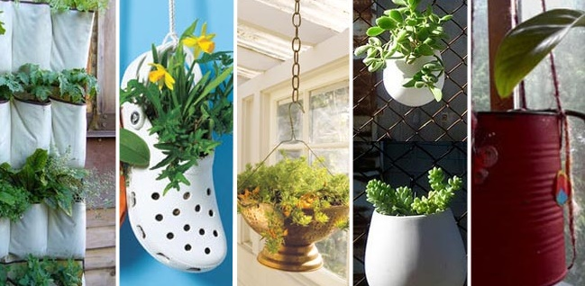 plantas purificadoras de ar : plantas para apartamento