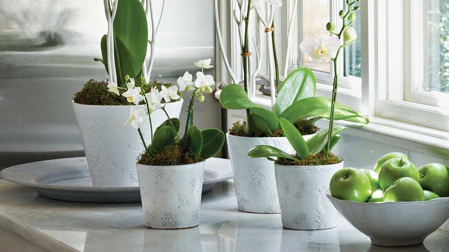 flores que purificam o ar