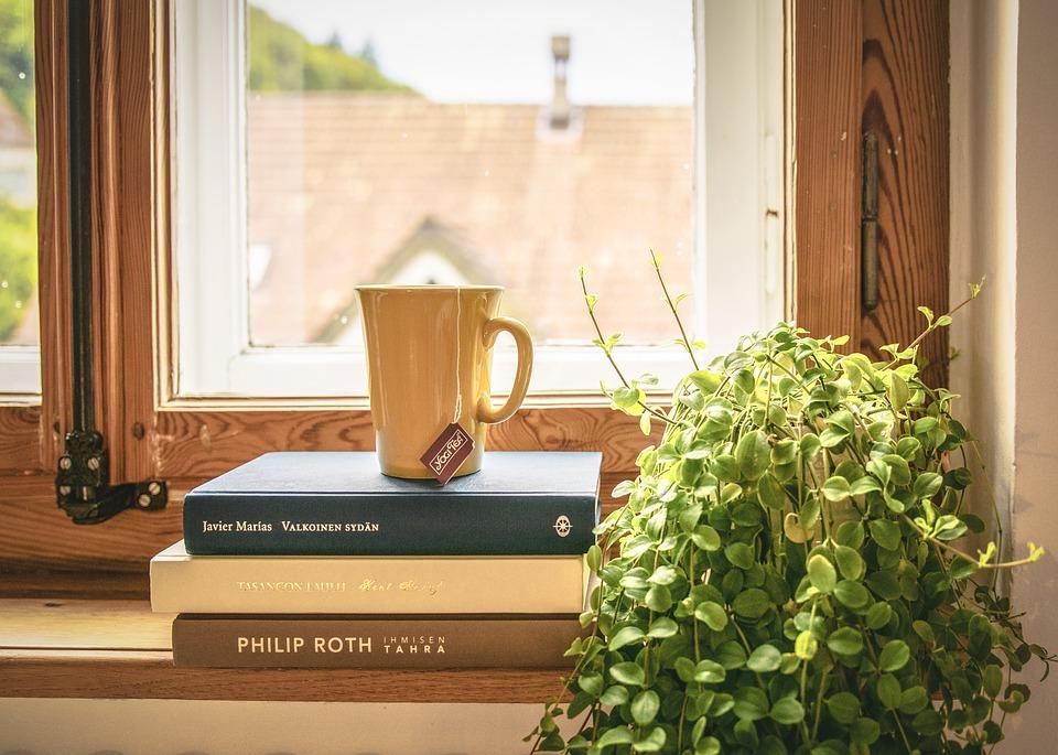 flores que purificam o ar : plantas para ambientes internos