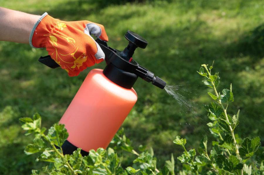 plantas com atividade inseticida : controle biológico