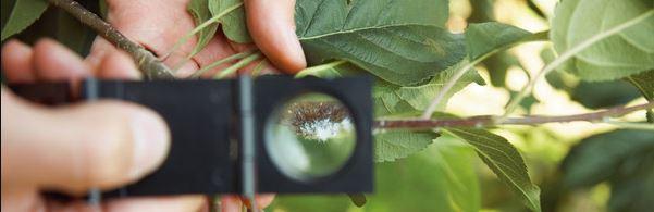 plantas com atividade inseticida : controle de pragas