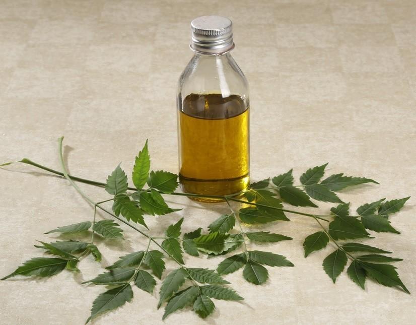 plantas com atividade inseticida : oleo de nem