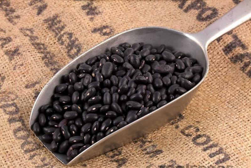 como plantar feijão orgânico : germinação do feijão