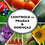 E-book Está Causando uma Revolução no Controle de Pragas, Doenças e Manejo de Ervas Daninhas