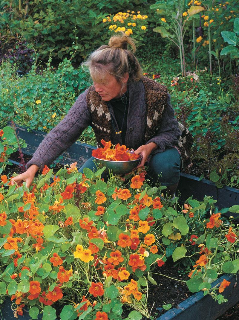 flores comestíveis : flores para jardim