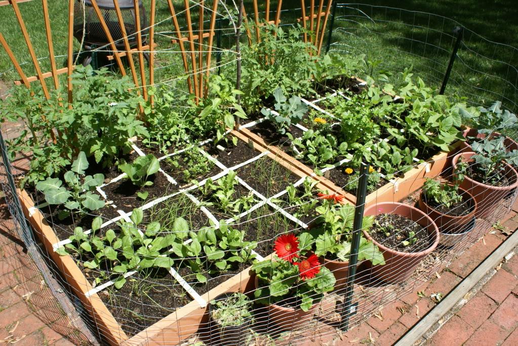 horta em 1 metro : horta em casas pequenas