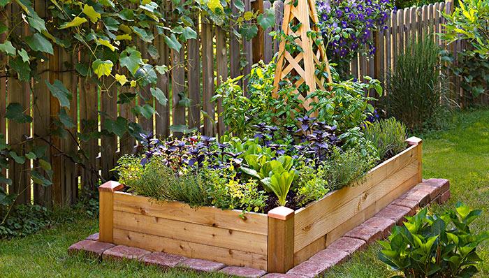 horta em 1 metro : horta organica