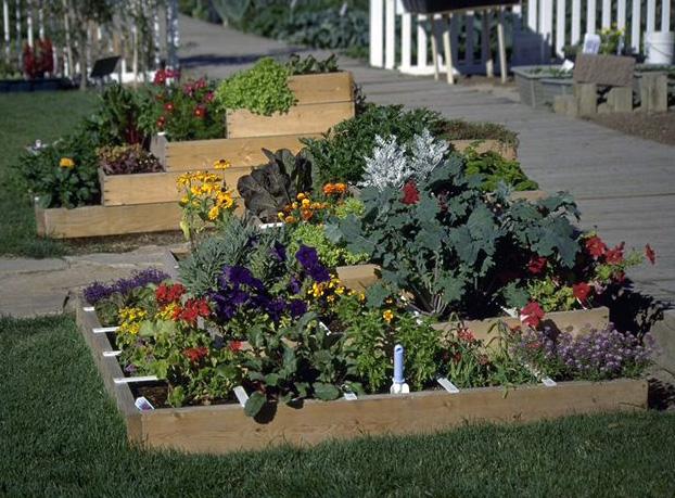 horta em 1 metro : mini horta
