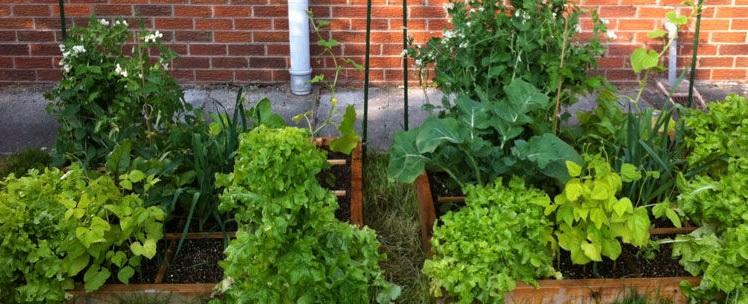horta em 1 metro : modelos de hortas