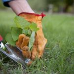 Plantas Invasoras: Prejuízos Para sua Horta Orgânica e Formas de Controle