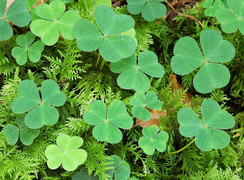 plantas invasoras : ervas daninhas