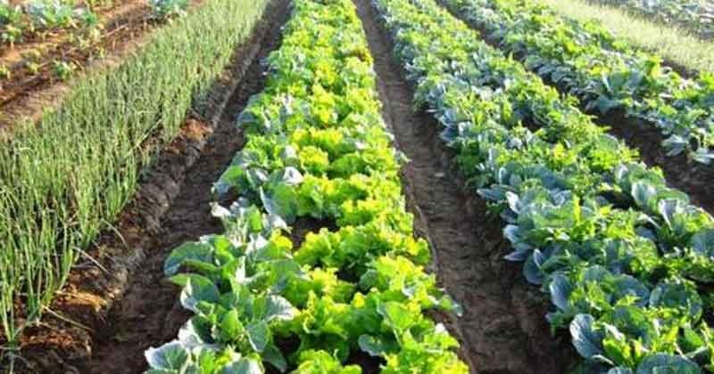 como controlar besouros : agricultura orgânica