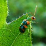 Aprenda Como Controlar Besouros em Sua Horta Orgânica