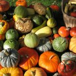 Tudo que Você Precisa saber para Plantar Abóbora Orgânica